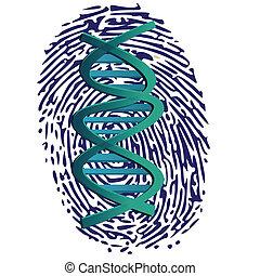 Daumenabdruck und DNA