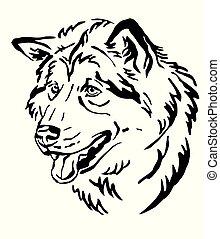 dekorativ, malamute, hund, abbildung, alaskisch, vektor, porträt