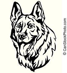 dekorativ, schafhirte, hund, abbildung, 3, vektor, porträt