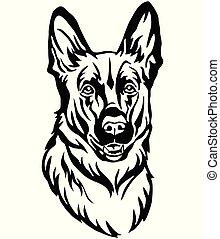 dekorativ, schafhirte, hund, abbildung, vektor, porträt