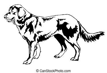 dekorativ, stehende , hund, abbildung, (shepherd), vektor, porträt