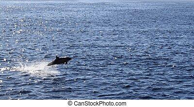 Delfin springen über Ozean