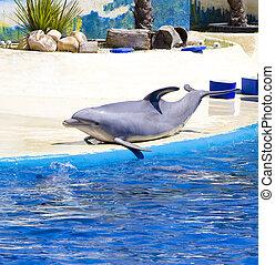 Delfin springt im Meer aus dem Wasser