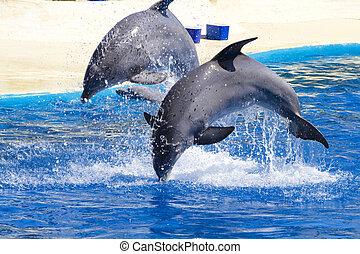 Delfin springt im Pool aus dem Wasser