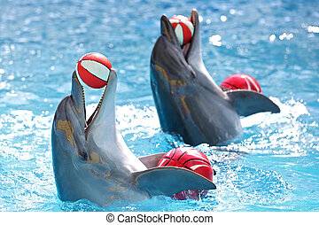 Delfine mit Eiern