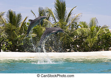 Delfine spielen