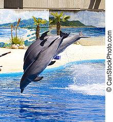 Delfine springen aus dem Wasser in Pool.