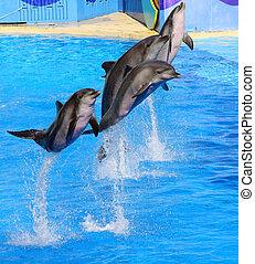 Delfine springen hoch aus blauem Wasser