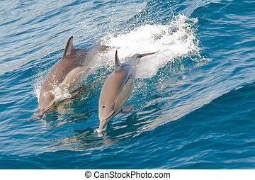 Delfine springen