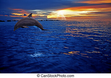 Delfinspringen