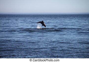 Delfinsprung