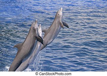 Delphine springen aus dem Wasser.