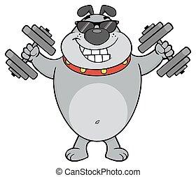 Der graue Bulldog-Cartoon-Maskottchen-Charakter mit Sonnenbrille, die mit Dumpingeln arbeiten
