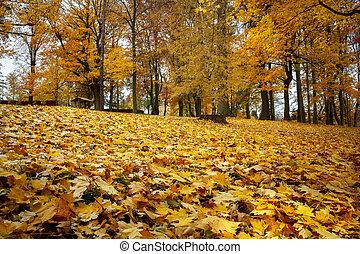 Der Herbst lebt noch mit gelben Ahornblättern