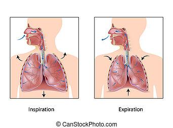 Der Kreislauf der Atmung, Eps10