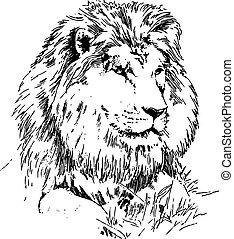 Der Löwe liegt auf Gras