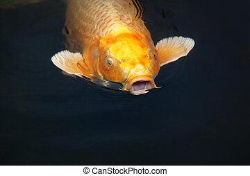Der sprechende Fisch