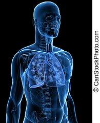 Detaillierte Lunge