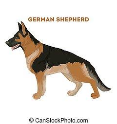Deutscher Schäferhund.