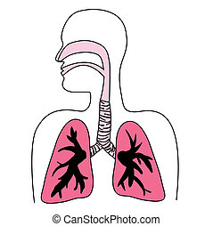 diagramm, atmungssystem, menschliche