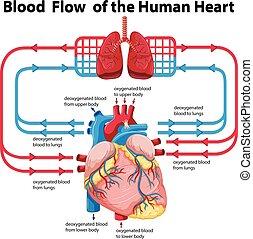 Diagramm, das Blut fließt.