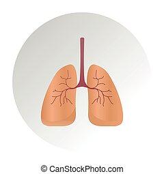 diagramm, detail, menschliche , illustration., vektor, koerperbau, krebs, lunge, system, lungen, lunge, ikone