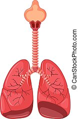 diagramm, lunge, menschliche