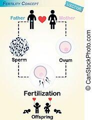 diagramm, menschliche , befruchtung