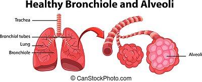 Diagramm zeigt gesunde Bronchiole und Alveoli.