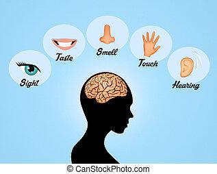 Die fünf Sinne.