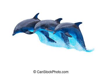 Die flaschenlosen Delfine isoliert auf weiß