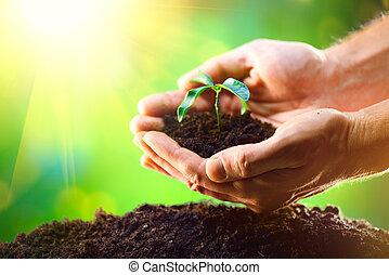 Die Hände des Menschen pflanzen die Sädlinge in den Boden über die Natur grün sonnigen Hintergrund.