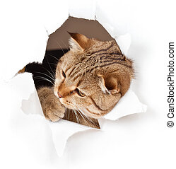Die Katze in der Papierseite ist isoliert.