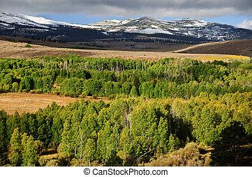 Die Landschaft der Wälder mit Bergen
