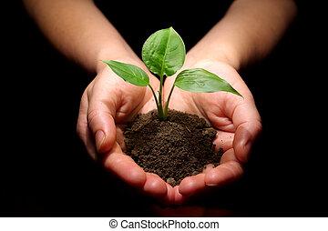 Die Pflanze ist in Händen