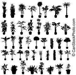 Die Pflanzen sammeln sich