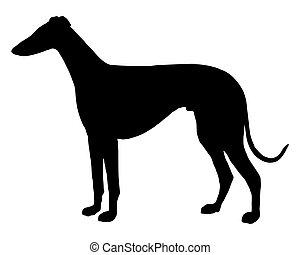 Die schwarze Silhouette eines Kurzhaarigen Sighthound