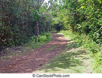 """Die Straße im Wald, Park """"Black River Gorge"""". Mauritius"""
