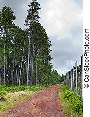 "Die Straße im Wald, rote Erde, Park "" Black River Gorge "". Mauritius"