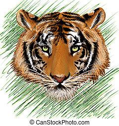 Die Tigerskizze.
