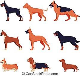 dobermann, tier, dachshund, corgi, jagdhund, sammlung, bandog, amerikanische , rottweiler, haustier, ansicht, purebred, hunden, schafhirte, boxer, deutsch, abbildung, basset, seite, walisisch, vektor