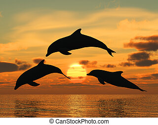 Dolphin, gelber Sonnenuntergang