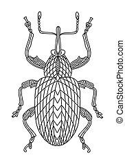 doodles, hand-drawn, käfer, walnuß, anti-stress, illustration., children., vektor, book., rüsselkäfer, linear, buch, färbung, erwachsene