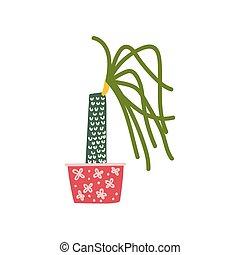 Dracaena Haus Pflanze wächst in Pot, Design Element für die natürliche Inneneinrichtung.