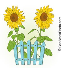 drawing., abbildung, rustic, blaues, vektor, zaun, zwei, sonnenblumen