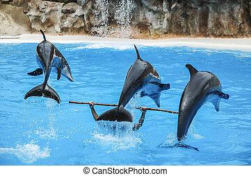 Drei Delfine in Aktion.