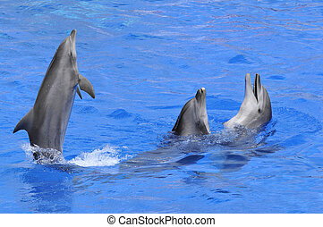 Drei Delfine in Wasser.