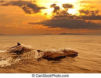 Drei Delfine spielen im Sonnenuntergang