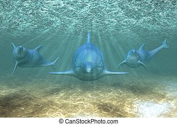 Drei Delfine
