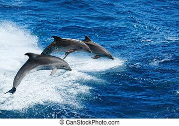 Drei Delfine.